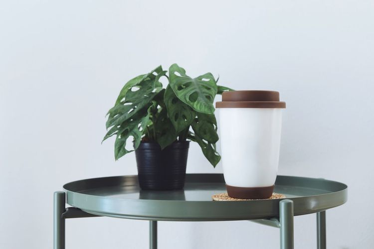 Close-up of potted plant on table against white background