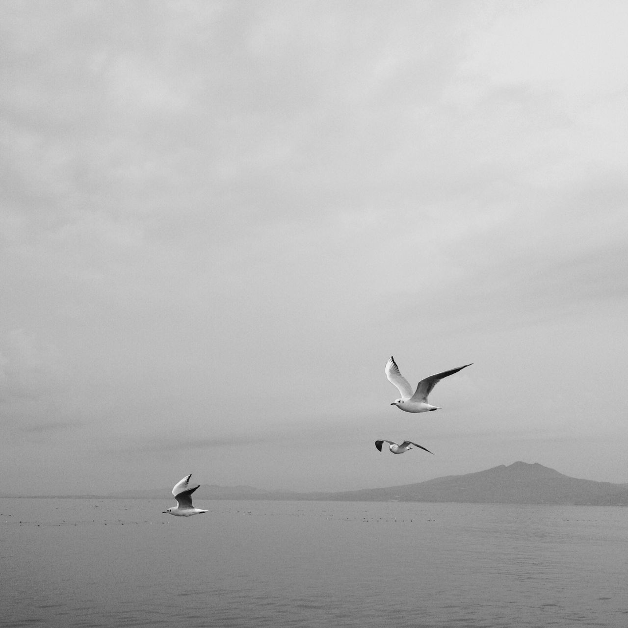 animal wildlife, animals in the wild, animal themes, bird, animal, flying, vertebrate, water, sky, sea, beauty in nature, scenics - nature, spread wings, group of animals, waterfront, cloud - sky, no people, nature, tranquil scene, seagull, horizon over water, outdoors