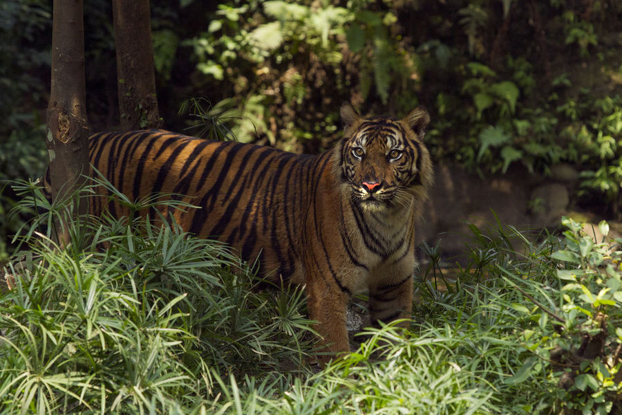 50+ Tiger Pictures HD | Download Authentic Images on EyeEm