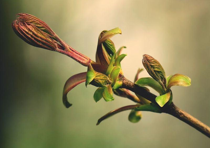 Fresh branch blurred background close-up Buds On Branches Buds Knospe Knospen Plants Flower Head Bud Buds Zweig Zweige Twig Spring Is Coming  Leaf Leaf 🍂 Beauty In Nature Macro Macro Photography Makro Close Up Close Up Nature Close Up Photography Close-up How I See The World Makro_collection Springtime