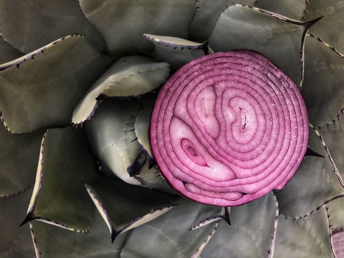Cactus and purple onion: The point is sharp you'll cry. Cactus Onion High Angle View No People Freshness Close-up Healthy Eating Textile Vegetable Container Onion Day Nature Directly Above Purple Pattern Food Pink Color Food And Drink Wellbeing Indoors  Still Life