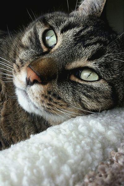 Pet Photography  Cat♡ Animal_collection Animal Photography EyeEm Best Shots - Macro / Up Close Eyemphotography