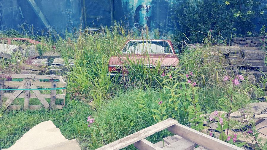 Abandoned plants
