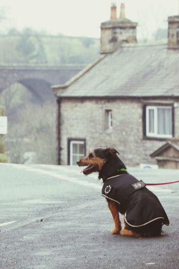 Dog on street against sky