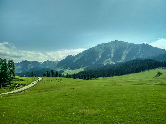 Happiness is being surrounded by greenery. Green Greenery Nature Naturelovers Naturephotography Photography Photooftheday Getty Getty Images EyeEm Best Shots Mobilephotography Kashmir Kashmirdiaries IndianOccupiedKashmir Outdoors Wanderlust Exploring Adventure Kashmir Mountain Forest Sky Grass Mountain Range Landscape Green Color