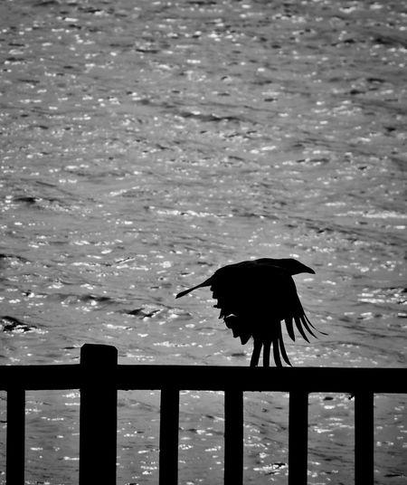 Silhouette bird flying over sea