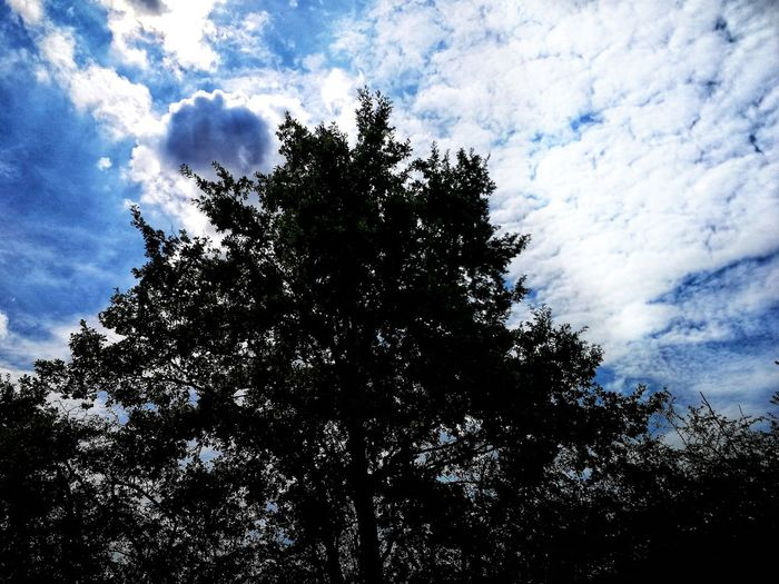 Tree Branch Silhouette Sky Cloud - Sky Sky Only Cloud Cloudscape
