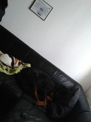 Arsch -auf Auge ;) meine müden Mädels Lilli Mit Freya @home Sweet Home Lazy Afternoon Ilovemypets My Pets♥ Faulenzen Cat And Dog Sisterlove❤ EyeEm Dog Lover EyeEm Cat Lover
