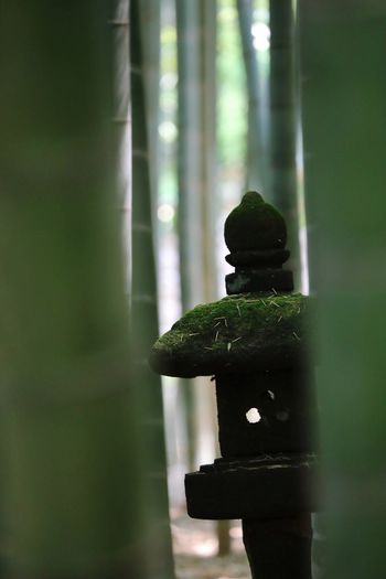 Moss Bamboo Stone Lantern No People Focus On Foreground Sculpture Close-up Taking Photos Green Color Tadaa Community Popular Photos EyeEm Best Shots EyeEm Selects EyeEm Best Shots - My Best Shot EyeEm Selects EyeEmNewHere