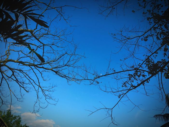 Skies are blue 🌿 Blue Nature Bare Tree Branch Beauty In Nature Tree Clear Sky No People Sky Low Angle View Growth Outdoors Day