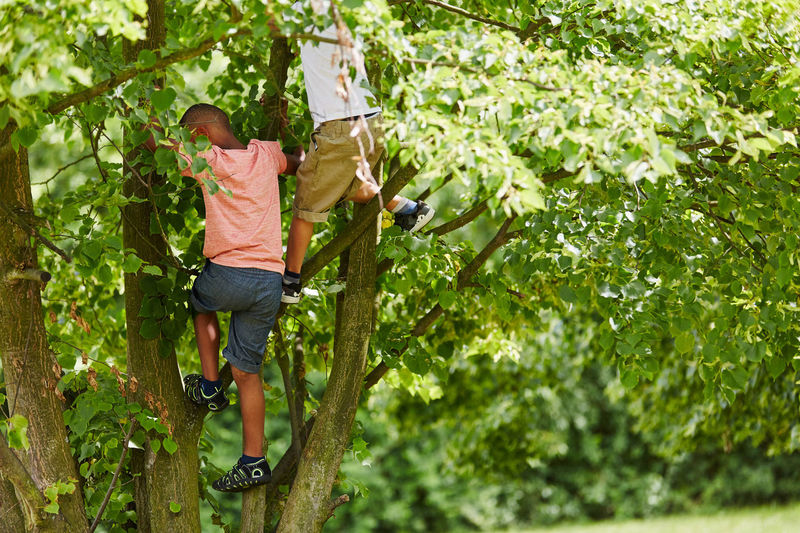 man climbing on tree in forest Active Activity Adventure Autumn Boy Boys Casual Clothing Challenge Child Childhood Children Climbing Day Effort Excitement Fall Forest Friend Friends Friendship Full Length Fun Green Color Growth Happy Holiday Interracial Kids Land Leisure Leisure Activity Lifestyles Males  Men Motion Nature One Person Outdoors People Plant Play Real People Rope Skill  Summer Together Tree Tree House Vacation Young