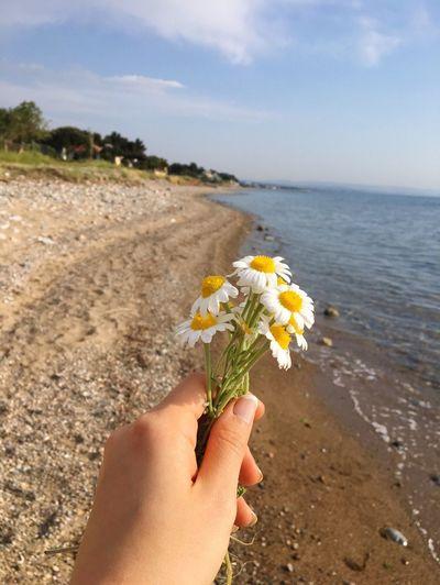 Çiçek olduğunun bile farkında değildir papatya.. O kadar saf... 🌼 Sun Human Body Part Flowering Plant Sea Flower Beach Land Human Hand Hand Plant Beauty In Nature Nature Sky Personal Perspective Freshness Day
