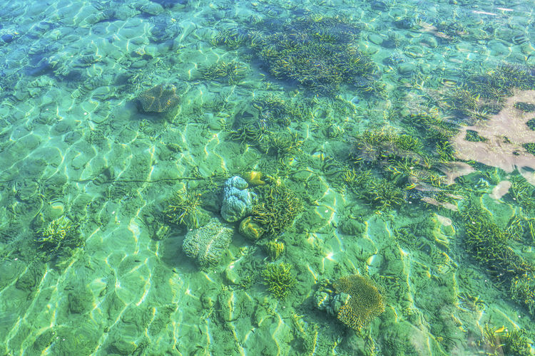 Backgrounds Beauty In Nature Close-up Coralreef Coralreefs Full Frame Nature No People Sea Life Textured  Under Water Photograpgy UnderSea