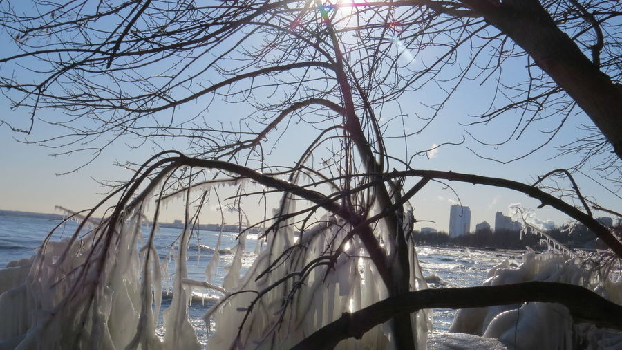 Sunny Bare Tree Beauty In Nature Branch Close-up Cold Day Frozen Food Ice On Trees Milwaukee Skyline Nature No People Outdoors Scenics Sky Sunlight Tranquility Tree Water Waterfront