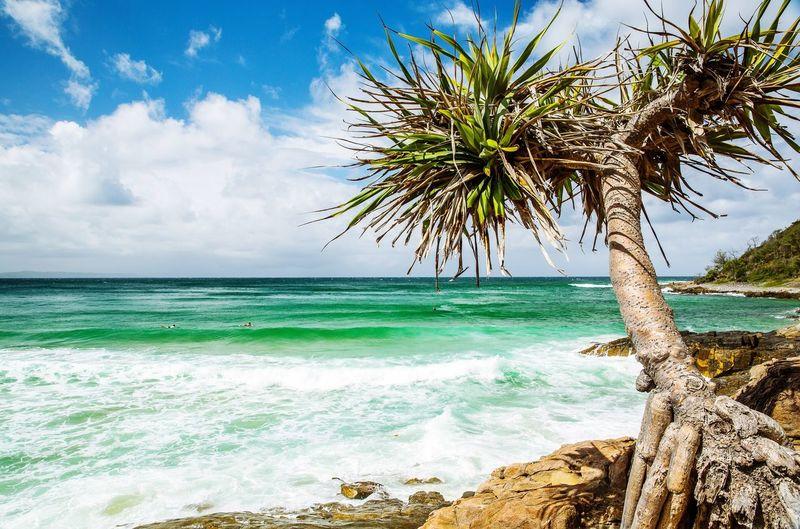 Palm tree on beach against sky