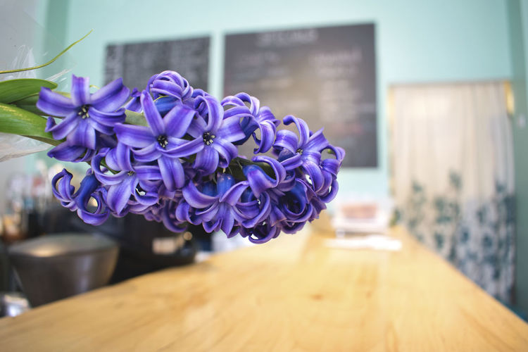 Bright Bright Colors Bright Room Cleveland Love Namaste Sunny Cafe Floral Flower Flowers Local Business Local Cafe Namaste ❤ Ohio Purple Flower Shop Springtime