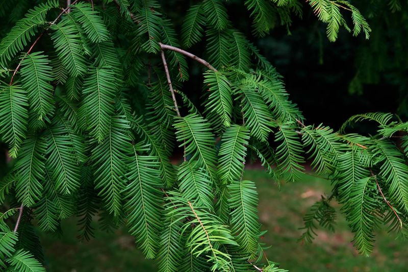 August 2018 Tree Branch  Green Leaves Green Nature Plant Tree Green Color Growth Leaf Beauty In Nature Nature No People Plant Part Day Focus On Foreground Outdoors Fern Close-up Tranquility Forest Coniferous Tree Branch Pinaceae