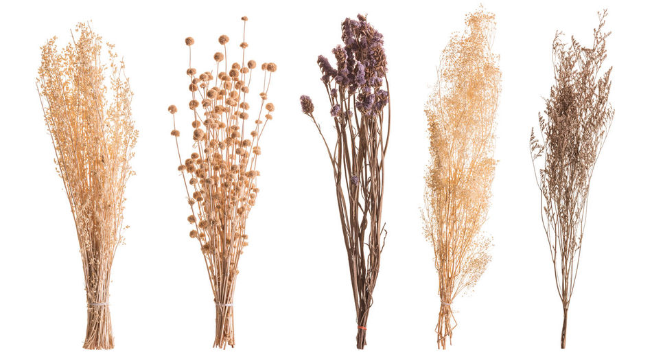 Close-up of wheat against white background