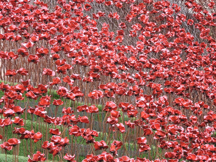 Abundance Flower Lincoln Castle Outdoors Poppies  Poppies 'wave' Red Rememberance Rememberance Poppy We Will Remember Them Our Best Pics