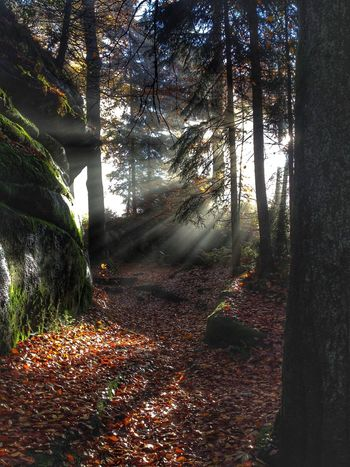 Autumn at the Waldstein. Tree Forest Nature Sunbeam Tree Trunk No People Beauty In Nature Tranquility Outdoors Growth Scenics Day Nature Natural Beauty Nature Lover Fichtelgebirge
