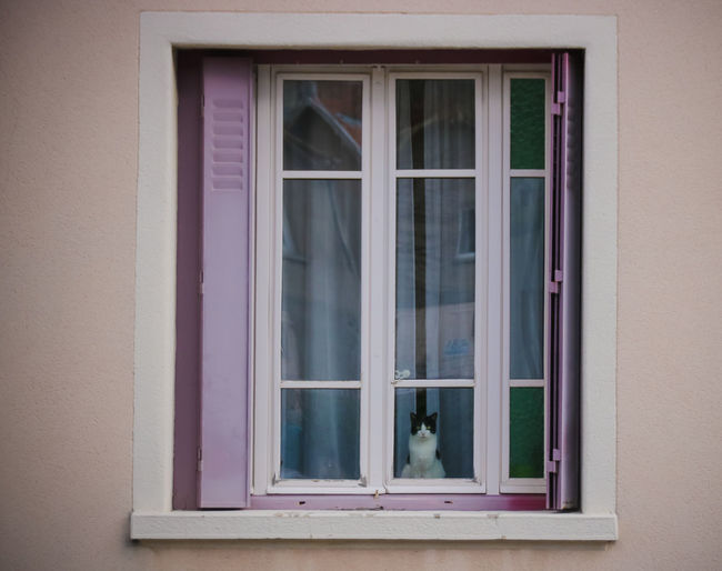 Window Architecture Building Exterior Built Structure Glass - Material Building Day Transparent House Pink Color Wall - Building Feature No People Outdoors Reflection Residential District Curtain Closed Close-up Wall Glass Window Frame Cat Looking Animal Themes Animal Standing Cute Reflection