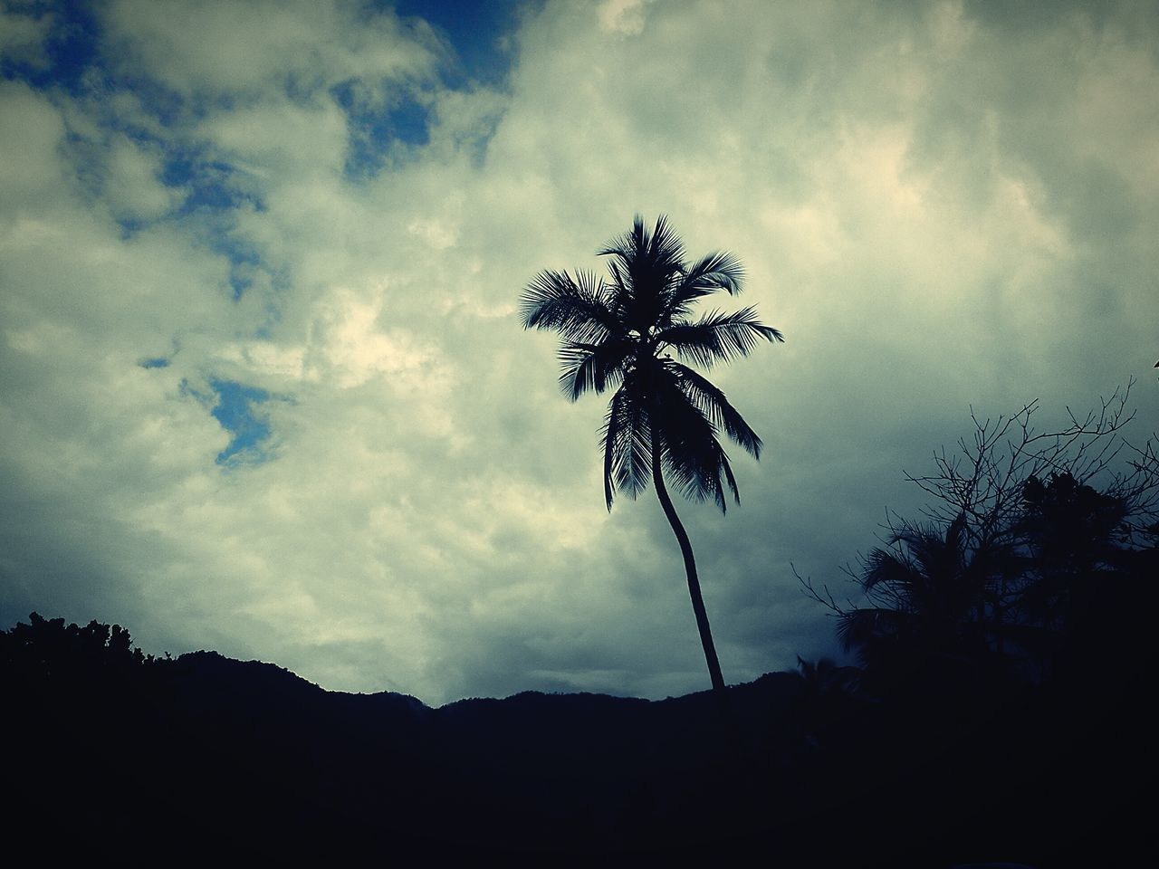 sky, silhouette, tree, low angle view, nature, cloud - sky, beauty in nature, no people, tranquility, outdoors, tranquil scene, palm tree, scenics, day, mountain