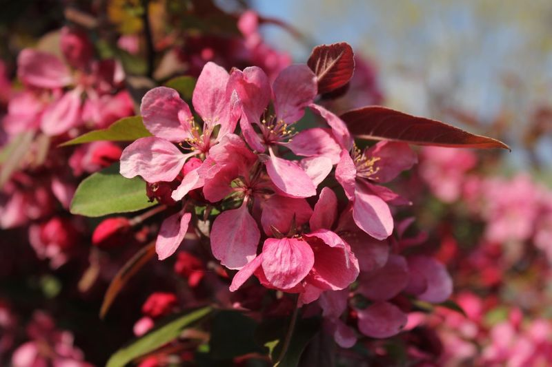 It will bear fruit. Pink Summer Bearfruit Art NH DC Mwh