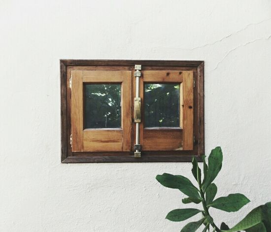 Irrelevant details Contrast Window Shooting Time White Shapes Nature Photooftheday Wood Simplicity Open Edit Botanical Writing With Light