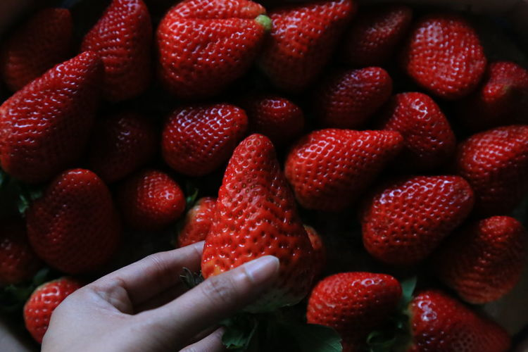 Holding a strawberry Stock Photography Raw Photography Stock Image Raw Image Noedit The Purist (no Edit, No Filter) Raw Nofilter Selective Focus Abundance Fruit Healthy Lifestyle Strawberry Food And Drink Healthy Eating Wellbeing Freshness Abstract Pattern, Texture, Shape And Form