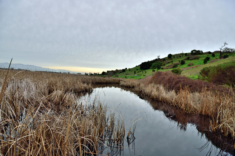 Coyote Hills 7 Coyote Hills Regional Park 978 Acres Southeast San Francisco Bay Small Mountain Range Rolling Hills Tidal Wetlands Marshlands Grasslands Wildlife Refuge Salt Pond Channel Reflection Reflections In The Water Hiking ❤️ Hiking Adventures Biking & Equestrian Trails Nature Nature Collection Beauty In Nature Landscape Landscape _collection  2,000 Year Old Tuibun Ohlone Indian Site Trees Reed-grass Family Eastbay Regional Park District Scenic Horizon Over Water
