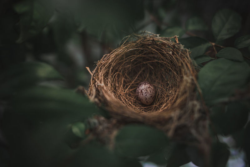 Small bird eggs in the green tree