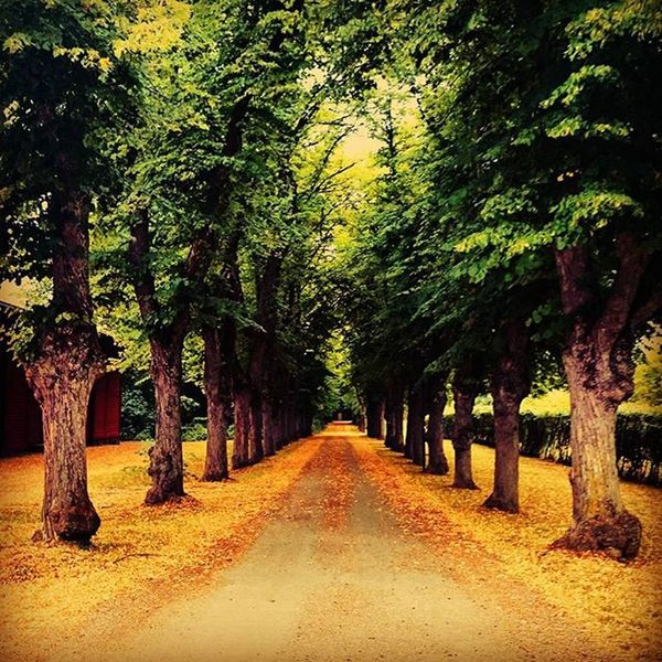 Autumn Trees Lonly Road Trees In A Row Green Leaves Nature Photography Nature_collection Nature_ Collection