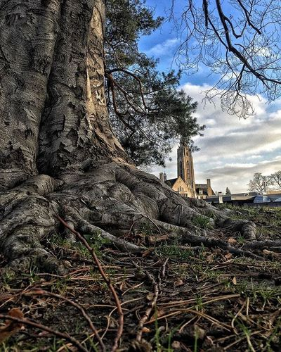 -ROCHESTER MEMORIAL ART GALLERY- Rochester Roctopshots Rochesterny  Leadingrelocal Rochesternewyork Explorerochester Snapseed Vscocam Iphone6plus IPhoneography IPhone Nature Naturephotography Travel Macro Macro_captures Macrophotography Giantimagery Roots Tree Tree_captures Thisisroc