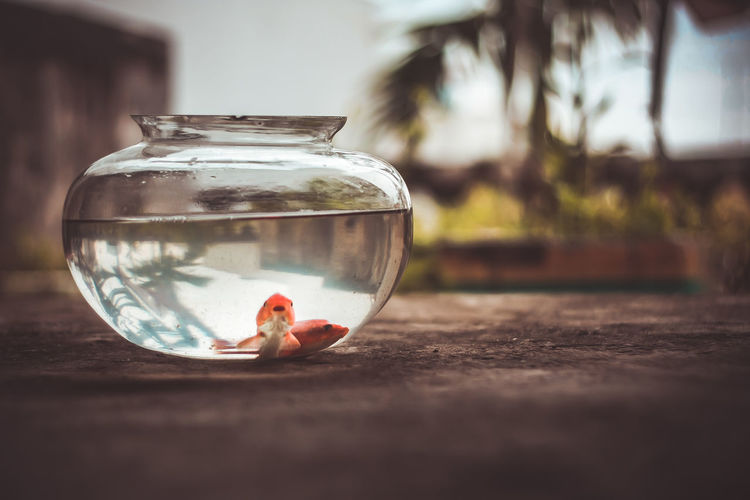 Goldfish in bowl on retaining wall