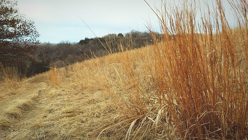 Nature Scenics No People Day Outdoors Prarie Gold The Way Forward Road Hiking Orange Color Nature Beauty In Nature Sky Field Exploring Grassland Cloudy Minnesota Travel Path Trail Blue Amateurphotography