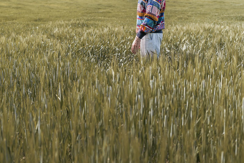 Photo of half body of a caucasian man standing in a farmland full of green rye plants during spring