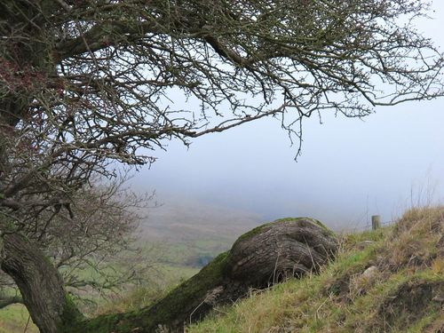 Fog Landscape Frosty Days Cold Temperature Pendle Hill Witchespath Foggy Day Change Eerie Beautiful EyeEmbestshots Witchcraft  Fine Art Photograhy Eye Em Nature Lover Eyeemphotography Beauty In Nature Tree Trunk Tranquil Scene Scenics Eeriebeautiful Non-urban Scene Witchesofinstagram Hills Spooky Hillview Misty Mornings