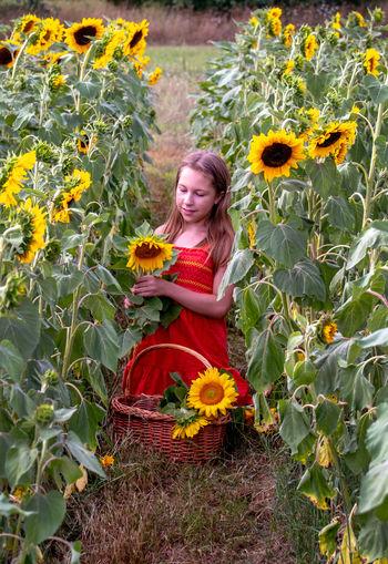 Full length of girl standing on sunflower