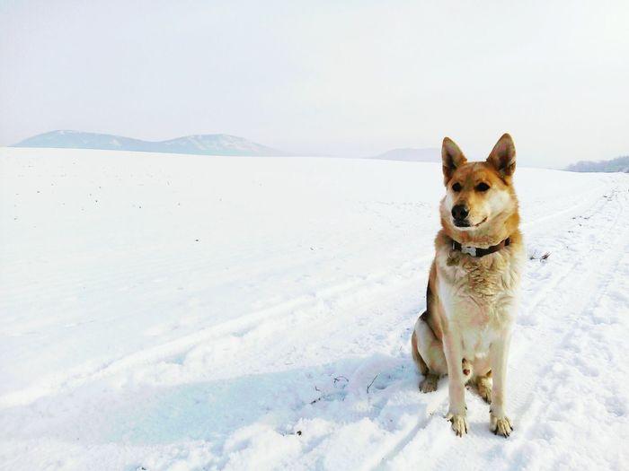 Dog sitting on snow field against sky