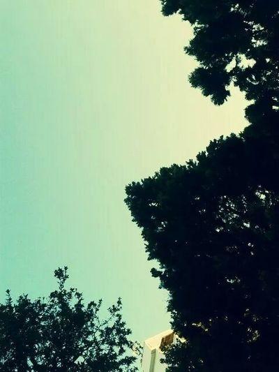 La tranquillità della foresta e la bellezza del cielo, sono una cosa unica e inimitabile Sky Forest Bella Giornata Yeah✌ Tranquillità