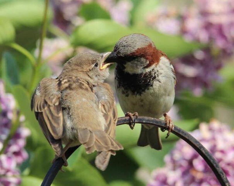 Sparrow Bird Animal Themes Animal Vertebrate Animal Wildlife Animals In The Wild Perching