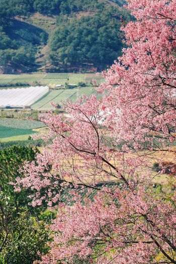 High angle view of cherry blossom tree during autumn