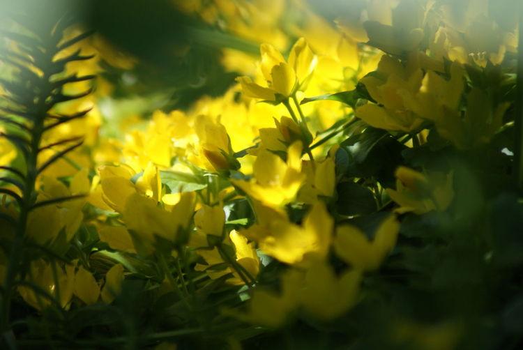 Yellow Tree Close-up Plant