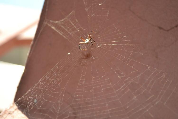 Spider Creatures