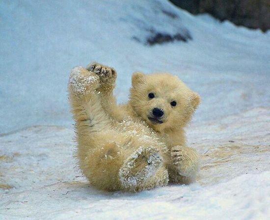 Goodday✌️ to all EyeEm Nature Lover Animals Cuteanimals Whitebear Beautiful Follow4follow