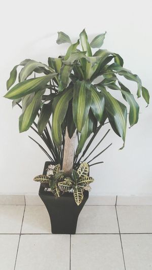 Plant Nature Freshness No People Day Vert Tranquil Scene Domestic Plant
