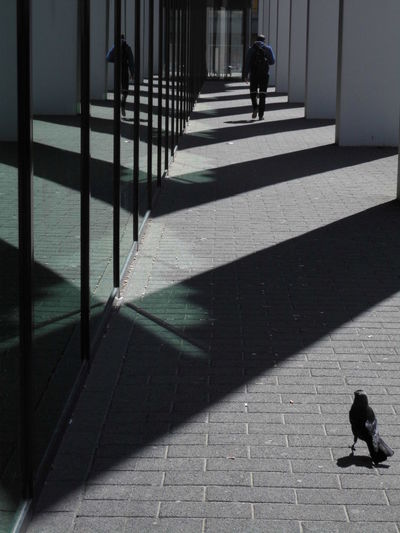 Man and crow in corridor on sunny day