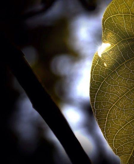 """Lead me, guide me, walk beside me....."" EyeEm Nature Lover Sunlight Silhouette Eye Em Nature Lover Photography Leaf PrayforNepal Love Sunshine Trees"