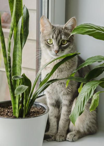 Cat sitting in a pot