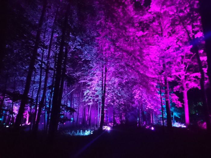 Low angle view of trees in forest at night